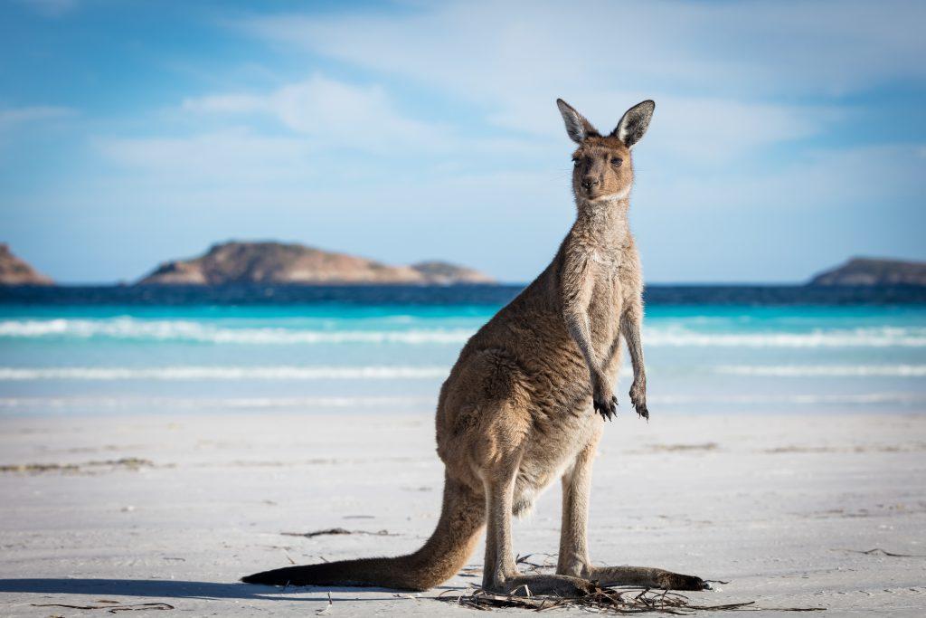 Australien - Sprachreise - High School